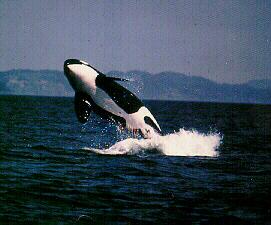 Quiz zum uno jahr der delfine